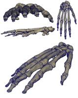 3d skeletal hand bones