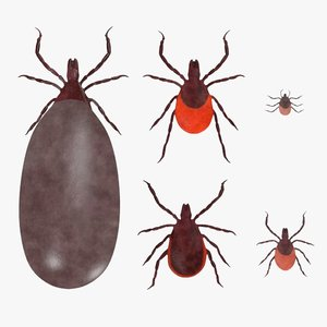 3d ixodes scapularis blood