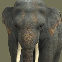 3d elephant-dg elephant model