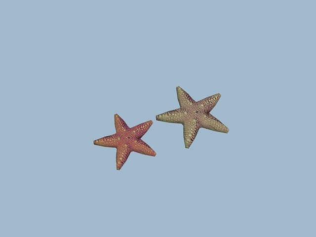 maya starfish star fish