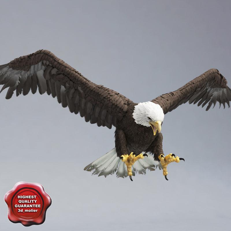 bald eagle pose 4 3d model
