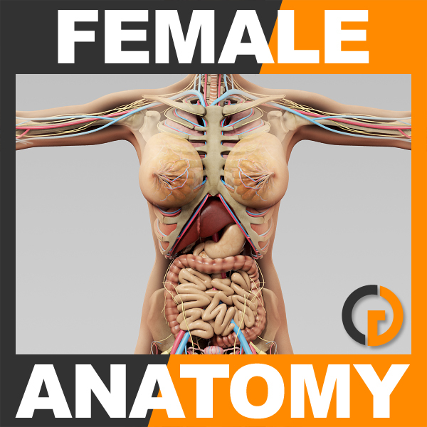 3ds human female anatomy -