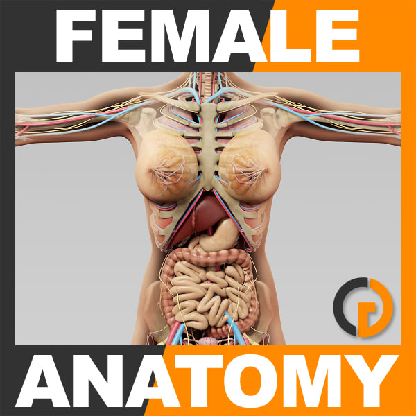 3ds Human Female Anatomy