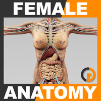 Human Female Anatomy - Body, Skeleton and Internal Organs