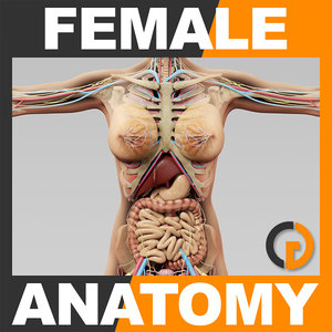 3ds human female anatomy -