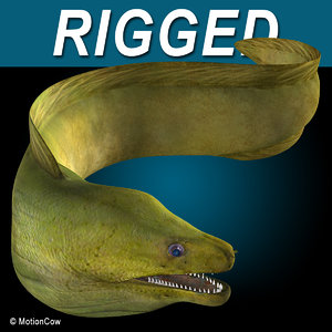 realistic green moray eel 3d model