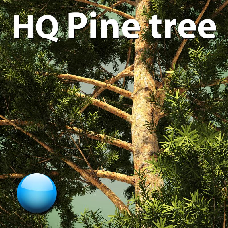 pine tree hq 3d model