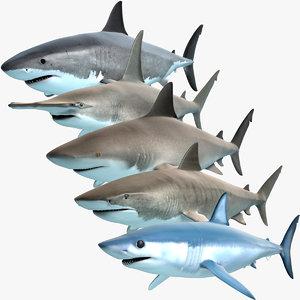 3d model shark predators great