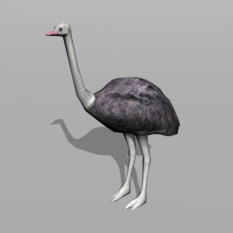 max ostrich uv