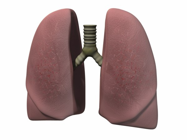 3d lung human lu model