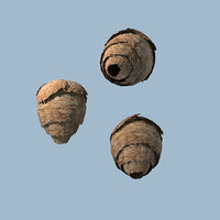 wasp nest max