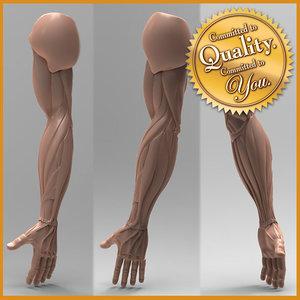 3d human arm anatomy