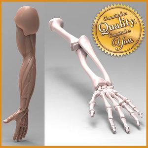 human arm anatomy combo 3d 3ds
