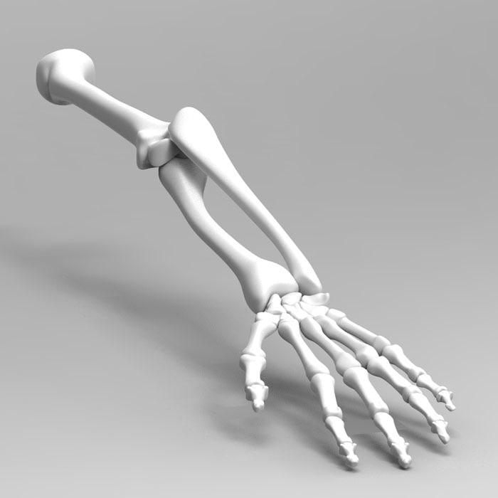 3d Model Human Arm Skeleton