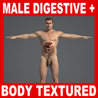 Digestive System & Male Body Anatomy V04 (Textured)