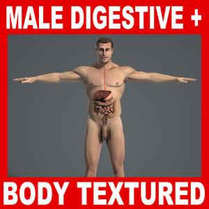 3d human digestive male body model