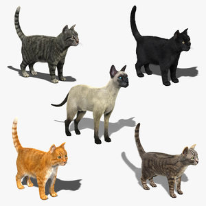 3d cats tabby fur model