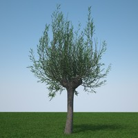 d model pollard willow tree