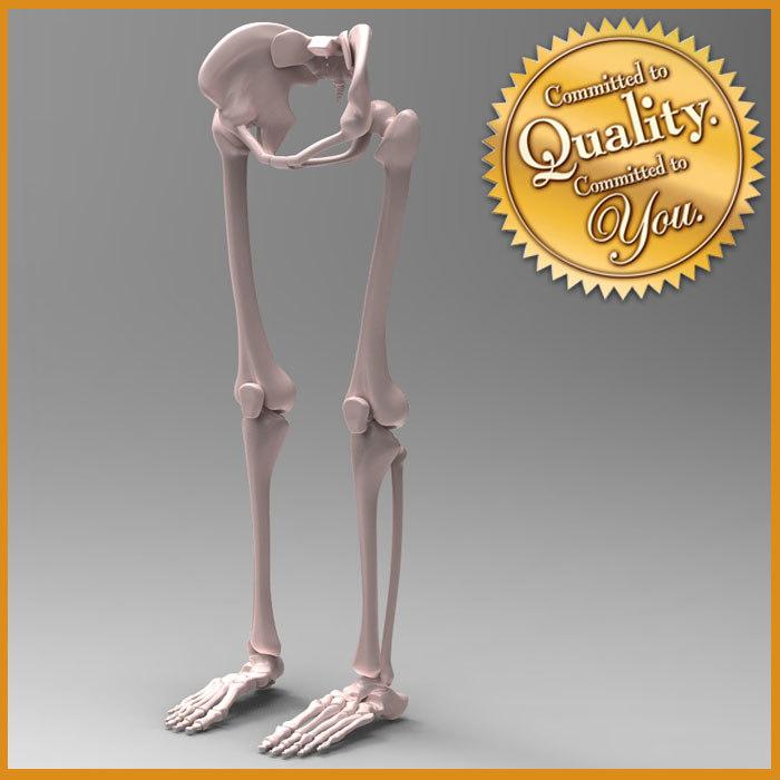 leg skeleton 3d model, Skeleton