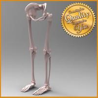 Human Leg Skeleton