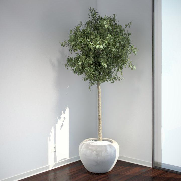 bay laurel tree 3d max