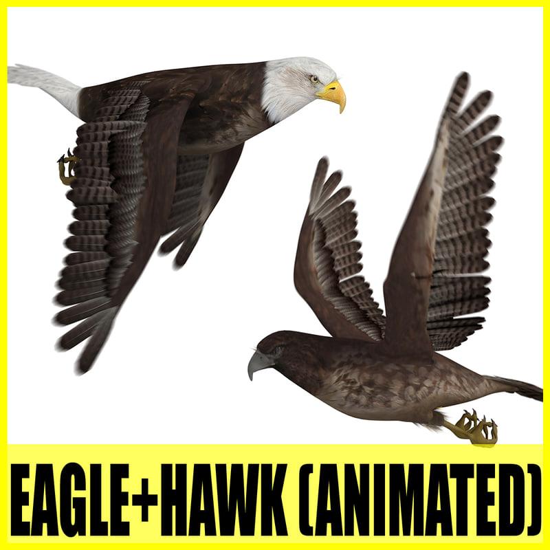 eagle hawk animation 3d model