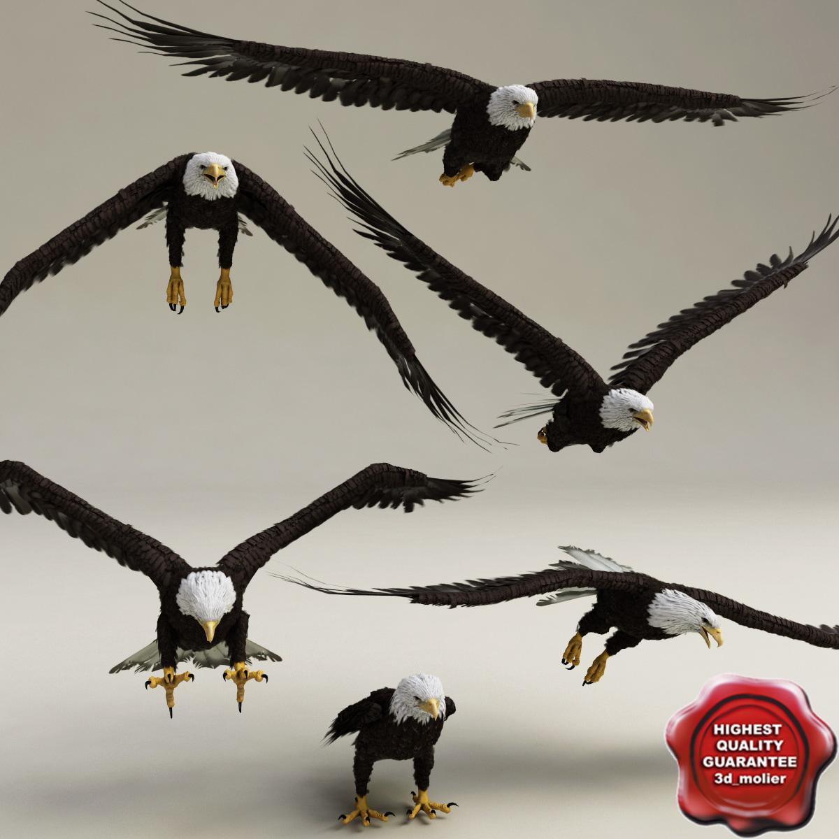 3d bald eagles poses