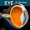 Eye X-Section