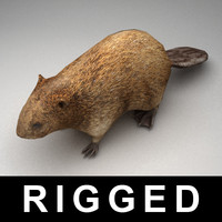3d model rigged beaver