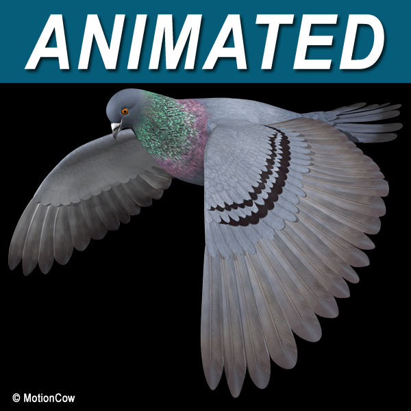 3d flying pigeon