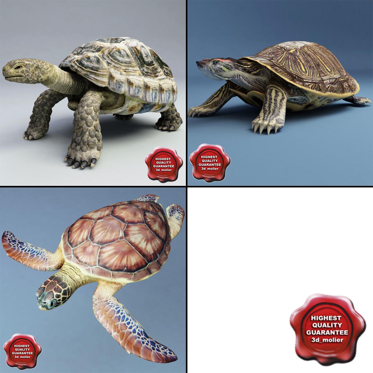 turtles set testudines max