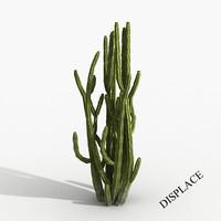 Plant Cactus Tree