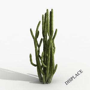 cactus tree max