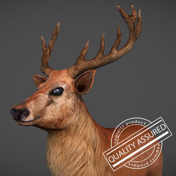 maya deer buck