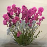 Flower_054