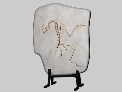 3d model archaeopteryx fossil