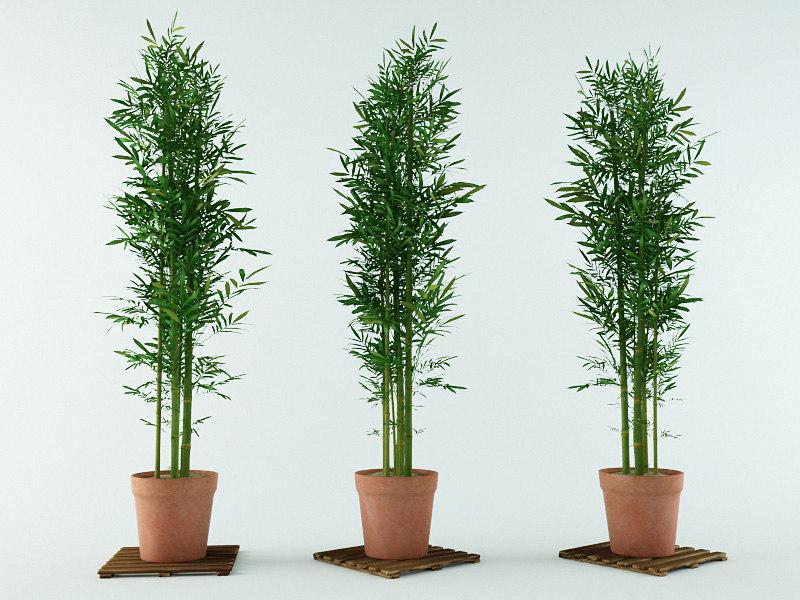 3d bamboo bush model