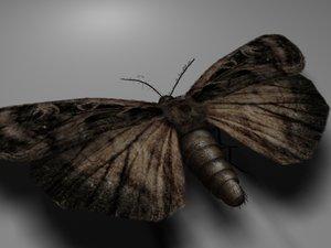 3d moth alpha model