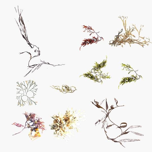 3dsmax sea weeds