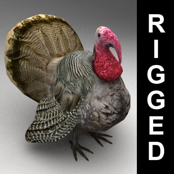 3d rigged turkey