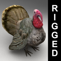 Turkey rigged