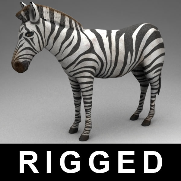 3d model rigged zebra