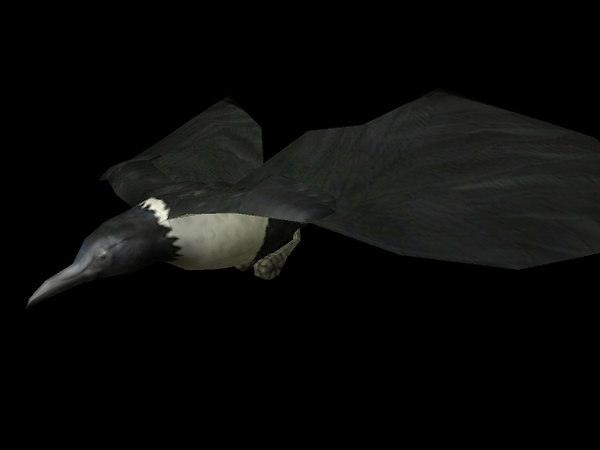 3d crow wing animations