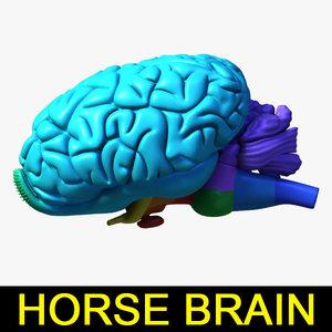 3d horse brain model