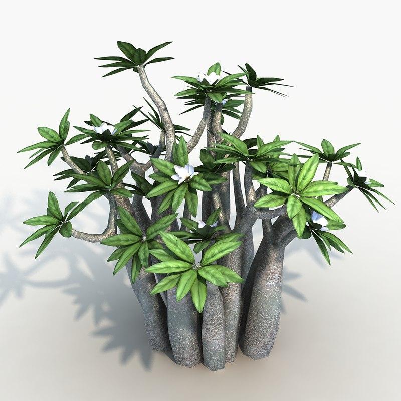 obj plant pachypodium
