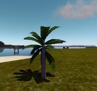 Small palmtree Max 2010