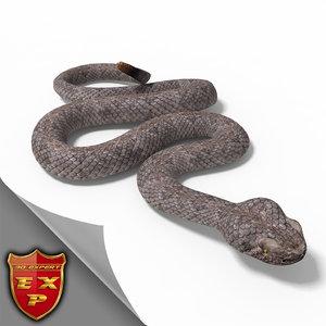 ma rattlesnake pose 2