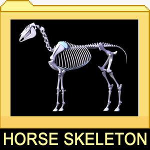 3d horse skeleton separated bones