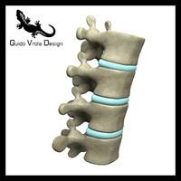 3d model human lumbar vertebrae