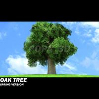 Oak Tree -Spring version-